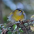 藪鳥~偶得之美