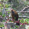 杉林溪不知名的鳥