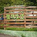 遊玩花蓮 楓林步道