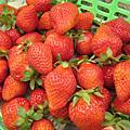 *2009.03.21*大湖採草莓♥