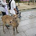 *2010.09.24*京阪神四都蜜月行 Day1