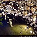 2011人間四月天˙京都賞櫻樂遊-八坂神社、円山公園、祇園白川篇