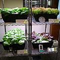 20130527李秋涼老師-大葉大學植物工廠記者會