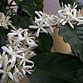 阿丁的植栽