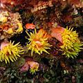 2007-05-12 東北角活動(珊瑚林