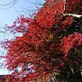 20081123高尾山