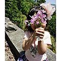 2011賞桐花