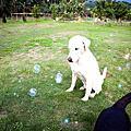 【生活寫真】轟狗的泡泡派對