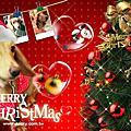 2009~2010聖誕卡