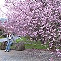 2011/02/21-22 愛在櫻花木下散步