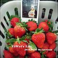 《放生之旅》台北‧桃園‧草莓園。