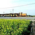 虎尾糖廠.追火車