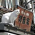 春遊東京Day3