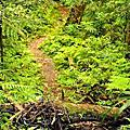 【路線探勘】-『SALOMON X TRAIL RUN 越野路跑,超硬賽道嘗鮮看!』