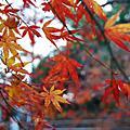 20071209京都之旅(2)