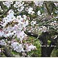 [2006] 阿里山賞花