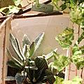 綠意植栽︱桌上型植栽