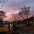20120213滬尾櫻花大道