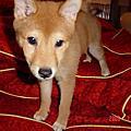 2006-01-08_貪吃的とも