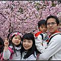 2015.02~粉嫩的櫻花世界