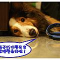 2008-06-14五子山日出