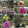 雲林景點/古坑『蘿莎玫瑰山莊』免費賞花、買保養品觀光景點