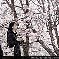 2013-02-19 櫻花紛飛@武陵農場