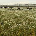 舊鐵橋的秋天