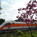 火車與花之邂逅