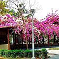 全台灣最美的公廁 在高雄 高雄橋頭竹林公園 高雄市橋頭區隆豐路
