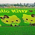 屏東縣[2018熱帶農業博覽會] ☆3D立體Hello Kitty彩繪稻田☆