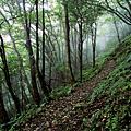 森林生態旅遊-東眼山
