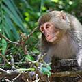 森林生態旅遊-知本