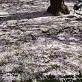 130408~130411 京都、彥根、神戶