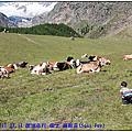 2011 歐洲之旅 Day 26-1 瑞士 薩斯菲~尋找哞哞