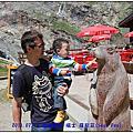 2011 歐洲之旅 Day 26-2 瑞士 薩斯菲~餵食土撥鼠