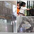 20110604獨角仙農場