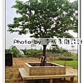 新竹 新豐鄉 南方松的其他用途 框架 椅子 盆栽