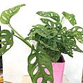 室內桌上盆栽