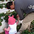 2007.02.11 大湖採草莓