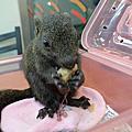 我的童話寵物-小松鼠DayDay的成長