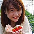 20100130炎淼採草莓