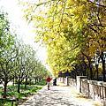Chicago - Foliage - 黃色的千禧公園