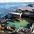 【加州景點】蒙特利水族館 Monterey Bay Aquarium