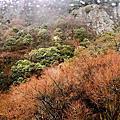 【香川縣小豆島景點】什麼都看不到但是包了纜車上山的寒霞溪
