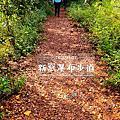 【宜蘭一日健行旅】新寮瀑布步道。龍潭湖步道。2020秋