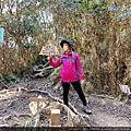 【桃園復興區】迷霧森林。塔曼山。需申請入山。20201231