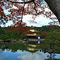 2011紅葉京都之旅Day2 金閣寺