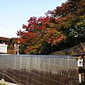 2011紅葉京都之旅Day2 嵐山