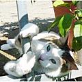 愛貓「小黑輪」專區